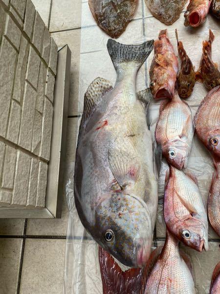 この魚は何ですか 大きいです。 何の料理がいいですか