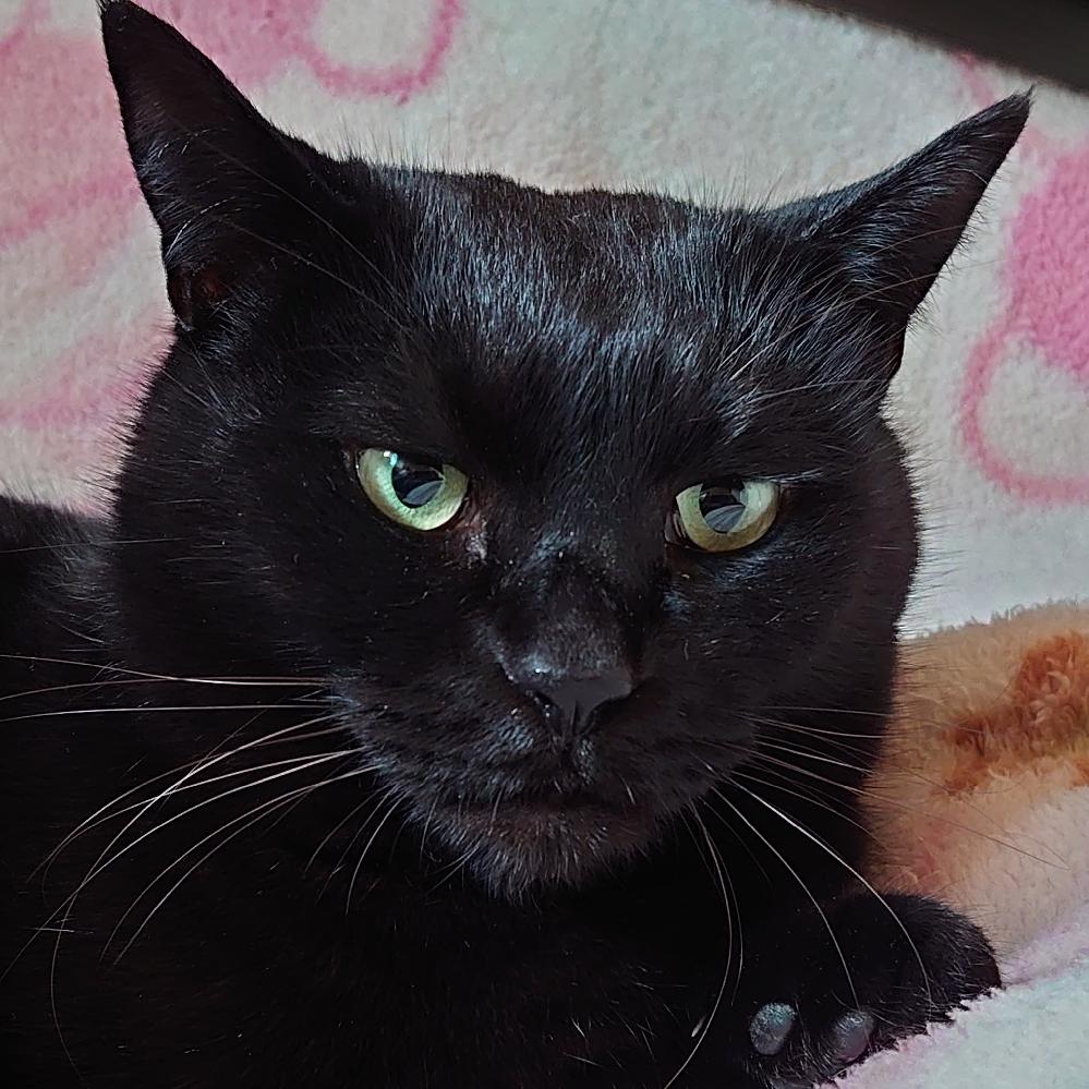 猫って人間と同じように見た目老けますか?うちの猫が老けてきたようで悲しいです。
