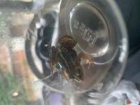 子供が田んぼで捕まえて来たのですが、この蛙の名前は何かわかる方いますか? もし分かれば何を食べるか、簡単な飼い方なども教えて頂けると助かります。