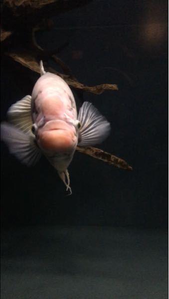 何と言う魚ですか?