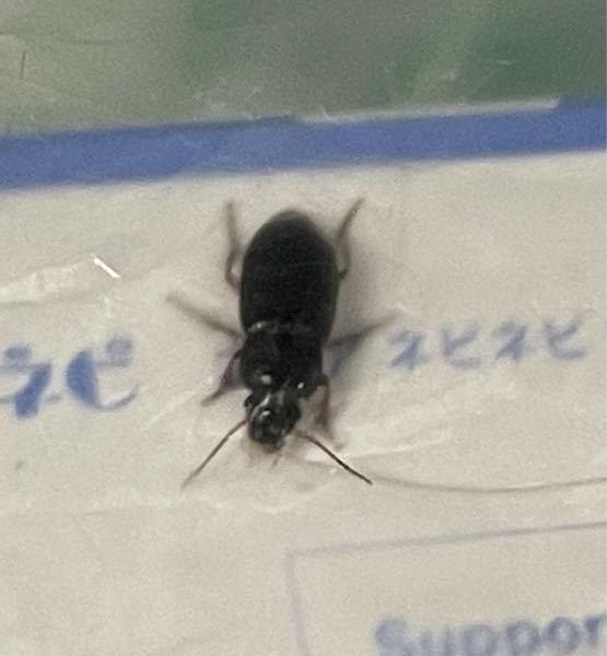 虫です。閲覧注意です。 こちらはゴキブリの赤ちゃんでしょうか? 知ってる方いましたら教えてください