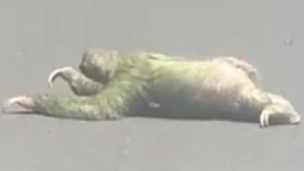 この生き物の名前を教えてください。 まるで人間が四つん這いで動くような動きをします。
