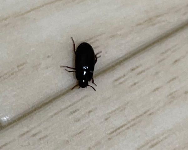 なんの虫かわかるかたいますか?