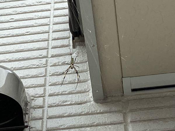 この蜘蛛は駆除したほうがいいでしょうか? 詳しい方、ご回答をお願い致します。