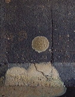 用水路の壁についている生物のコロニーのようなものは何ですか? 写真を添付します。