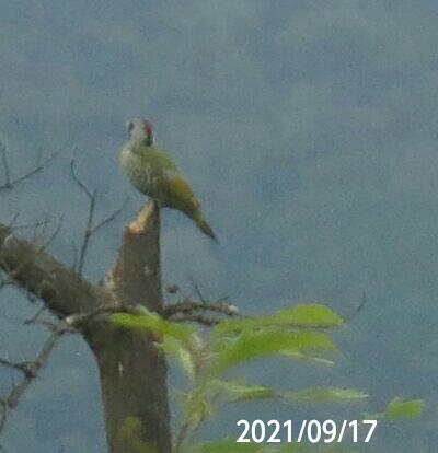 小鳥の名前を教えてください、 岐阜県遠見山で、 撮影20210917