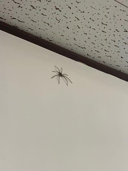 かなり大きい蜘蛛だったのですが、種類はわかりますか? 棒でつついて退かしたのですが、毒は無いですか?