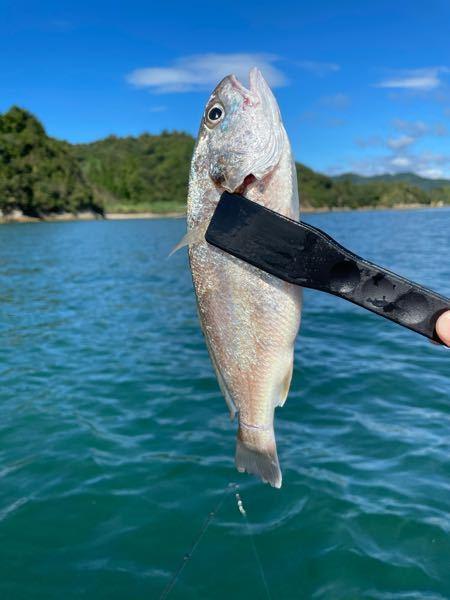 この魚なんてやつですか?