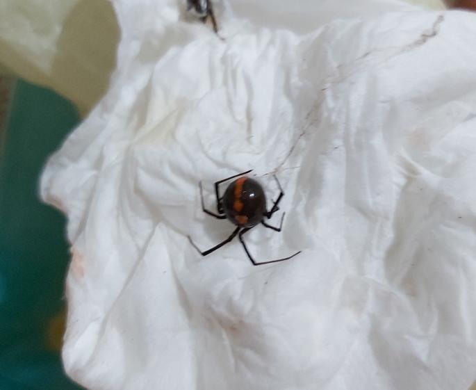この蜘蛛は何という種類ですか? 害はありますか?