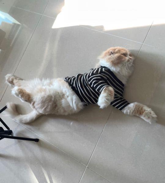 この猫の種類はなんですか