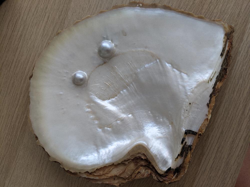 この貝は何でしょうか?知人からいただいたのですが、どのようなものか知りたいです。 調べるとマベ貝なのかなと思うのですが、詳しい方教えて下さい。 マベパールだとしたら、加工してアクセサリーなどにしてくださる加工所に持ち込みたいです。