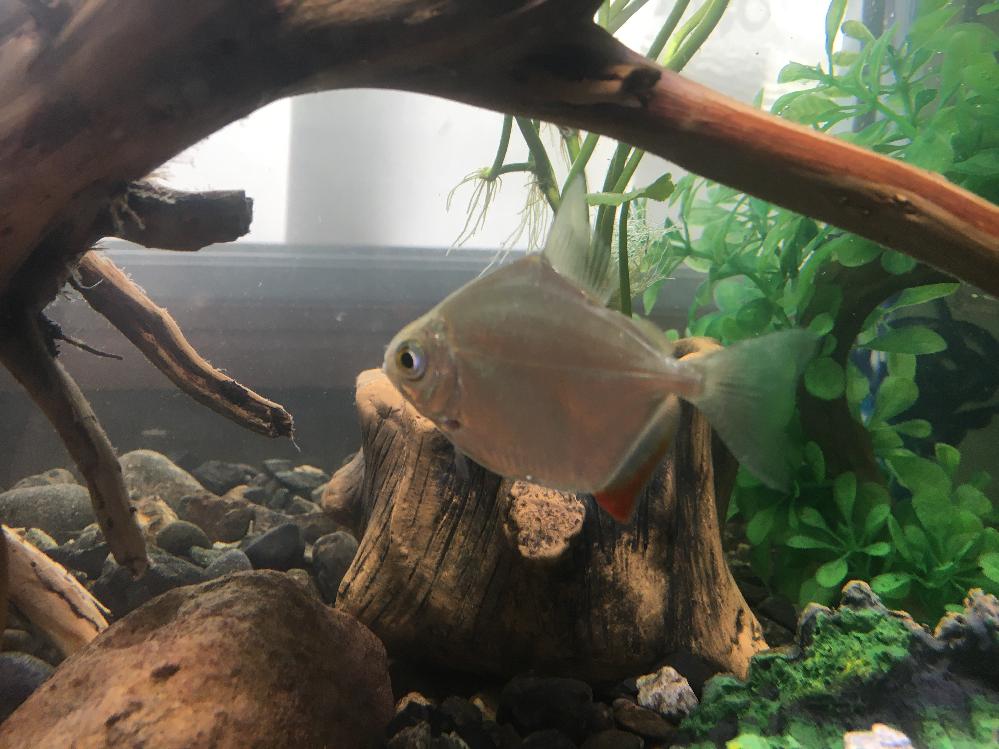 この魚は何て名前の魚ですか?