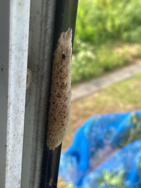 至急です。これはなんの巣なのか分かりますか?