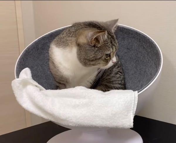 YouTube「もちまる日記」のもちまるが愛用の丸い猫用ベッドはどこで買えますか?Amazonで探しても見つけられず、、、。どなたか教えてください。