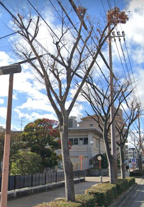 街路樹の名前がわかる方、教えてください。 ストリートビューの画像で見にくいのですが、 どうぞよろしくお願いします!