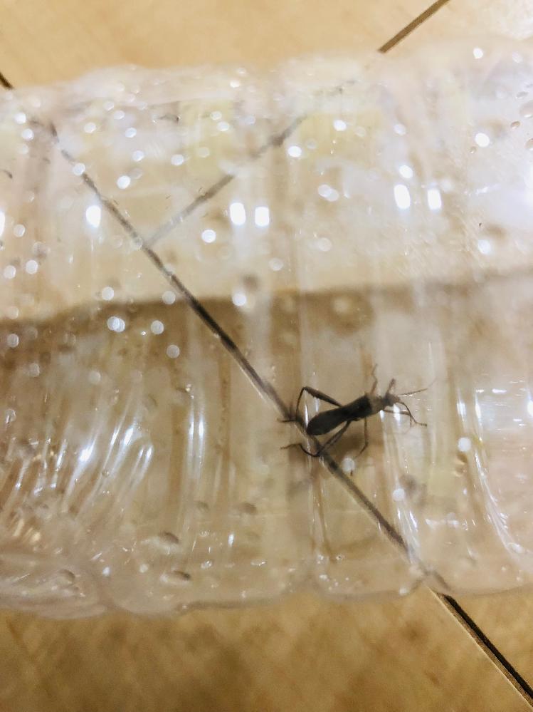 この虫は何でしょうか? 見えにくくてすみません 教えてください。