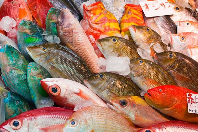「魚」について述べた名言を教えて下さい