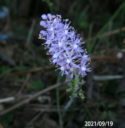 野草の名前を教えてください、 岐阜県川辺権現山で、 撮影20210919