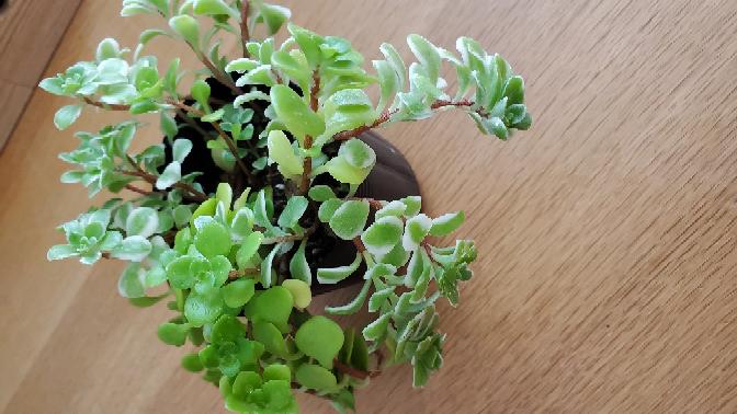 野菜無人販売所の隣に「無料でお譲りします」とあったので写真の観葉植物を貰ってきたのですが、Googleで調べてもどの種類の植物なのか分かりません。植物に詳しいかた教えていただけると幸いです