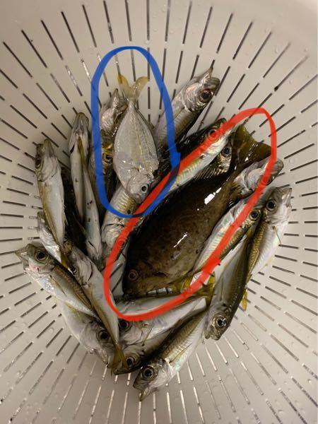 この二つは何という魚でしょうか?