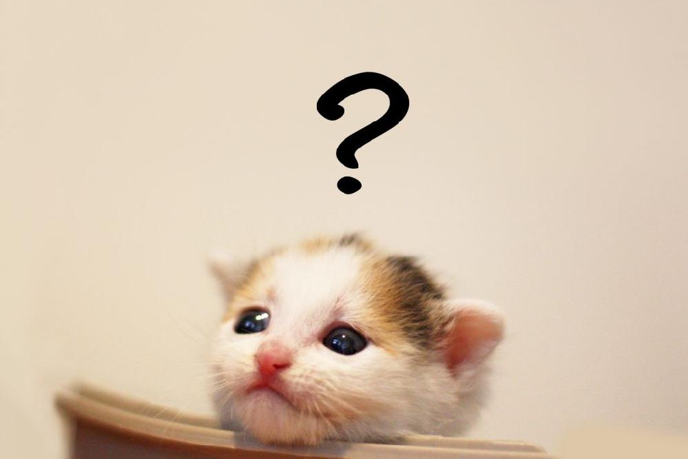 競馬カテゴリーにこんな企画ありました('_'?)不定期('_'?)にしろありました('_'?)はじめてみたんですが(笑) 質問みて! やっぱり山さんは お茶目だな~と思いました。 山さん「捨てること」を札幌では「投げる」と言うの('_'?) https://detail.chiebukuro.yahoo.co.jp/qa/question_detail/q11249671221