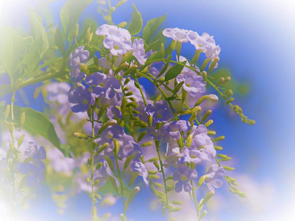 この花の名前を教えていただけないでしょうか よろしくお願いします