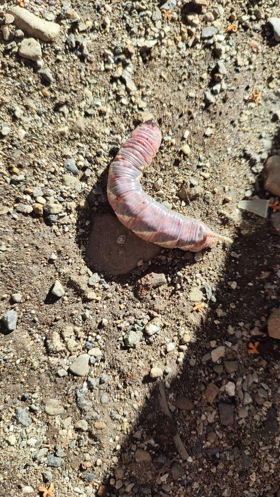 公園で子供と発見しました。何の幼虫でしょうか?