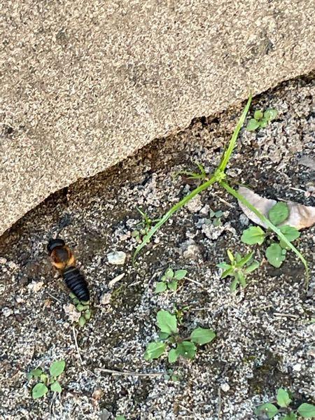これなんていうハチですか?