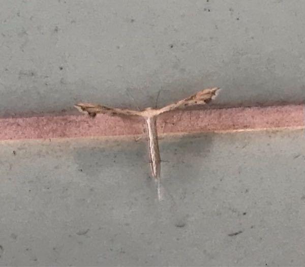 これは何蛾か分かりますか?