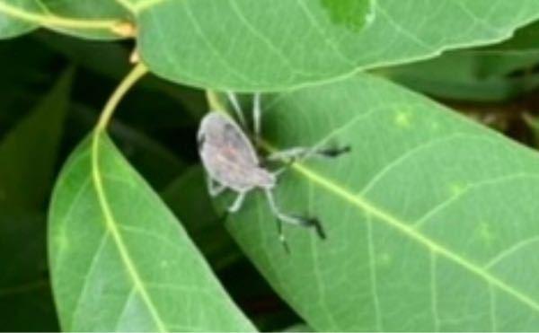 散歩中に見つけました。虫の名前を知りたいです。大阪市内です。 至急よろしくお願いします。