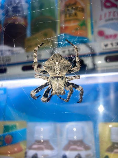 この蜘蛛はなんですか?