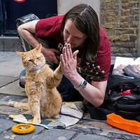 猫ちゃんが出演してる作品でオススメありますか?