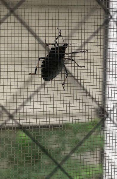これってゴキブリですか?