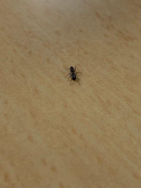 このアリ誰ですか? めっちゃキモい動きでよく見るアリじゃなかったです