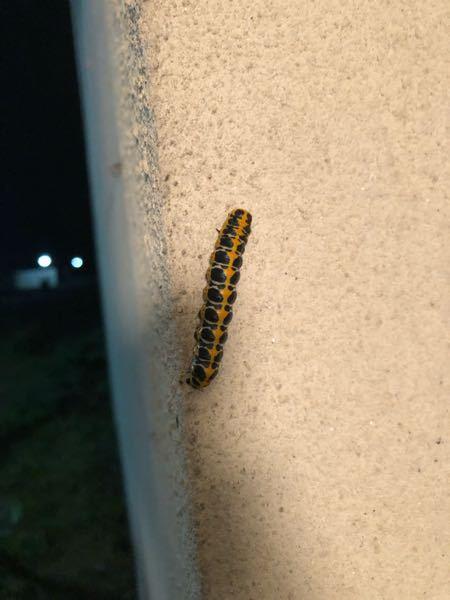 なんの幼虫ですか?