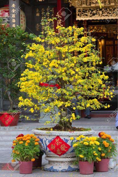 ベトナムのこの花は日本にはありますか? 日本名なんですか?