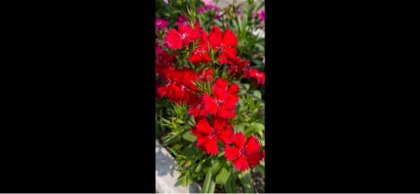 この花は、何ですか?