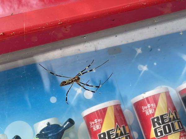 このクモ子供の頃からよく見るんですけど、なんていうものですか。毒の類は持ってますか?