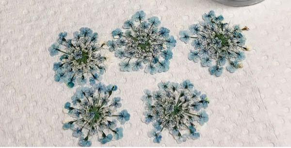この花は何ていう花なのでしょうか?? あと、これくらい花びら1つ1つがしっかりしてる押し花が欲しいのですがどちらで売っているかご存知の方教えて頂けるとありがたいです。 よろしくお願いします!!