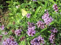蝶の名前を教えて下さい。上手く撮影出来ませんでした。