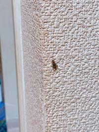 コレはゴキブリの赤ちゃんですか?初めて見る模様だったので。。今年初めてゴキブリを見ました。。何故今頃。。ショックです。