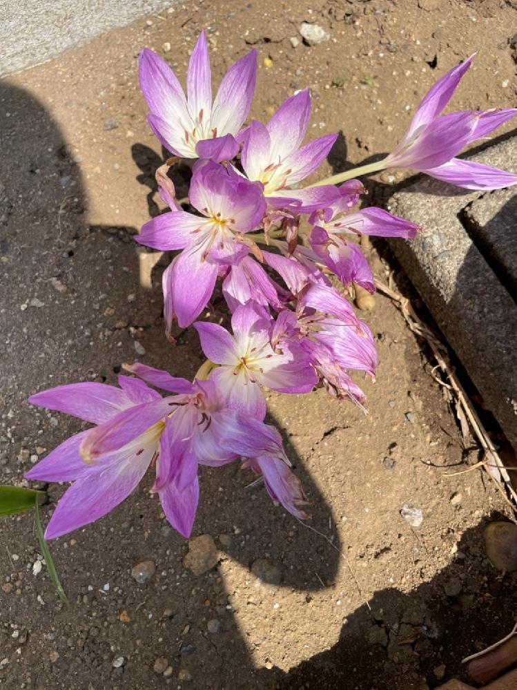 このお花は何というお花でしょうか? ご存知の方いらっしゃいましたら教えてください。