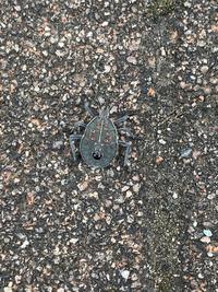 この虫の名前教えてください。