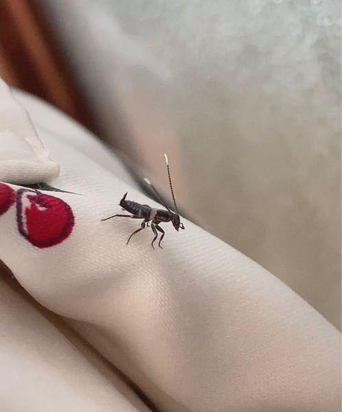 この虫はなんという虫ですか?