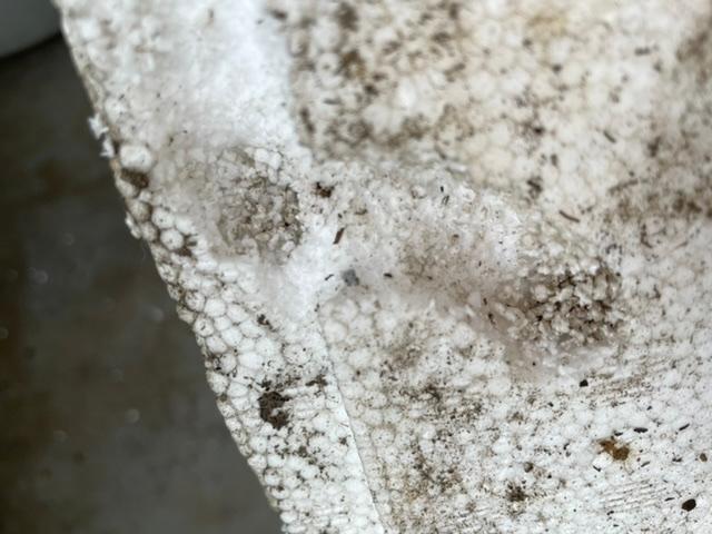 コガネムシの幼虫 メダカのベランダ飼育 寒暖差対策で梱包用発泡スチロール箱の中に、発泡スチロール製のメダカ飼育容器を入れてます。 夏は外箱にも水をはってますが、最近やたらに外箱の水が減ると思っていたらコガネムシの幼虫の死骸が出てきました。 多分、コガネムシだと思います。 1、幼虫が発泡スチロールを食い荒らしたようです…何でも食べるんですね… 一度発泡スチロールの箱に卵を産まれると次もあるでしょうか?偶然なのか? 2、重要なメダカの容器の方は穴は空いてないようです。コガネムシが発泡スチロールに卵を産まないようにするには細かいネットを貼るしかないでしょうか?普段は鳥に食べられないように100均の白いワイヤーネットを置いてます。 アドバイス宜しくお願いします。 昆虫カテかアクアリウムか悩んだので両方にしました。