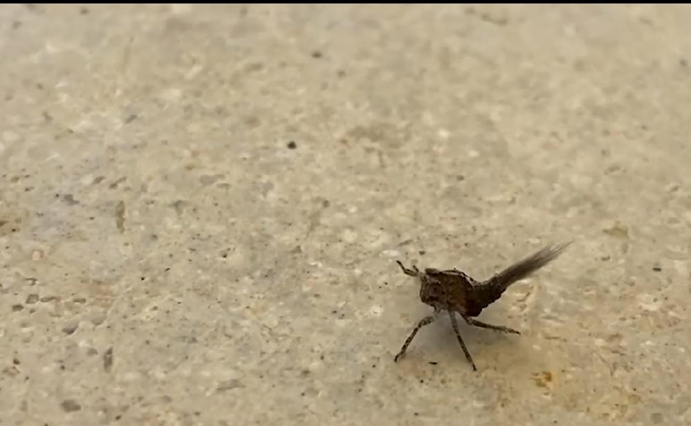 この虫は何という虫でしょうか?カニのような動きでした
