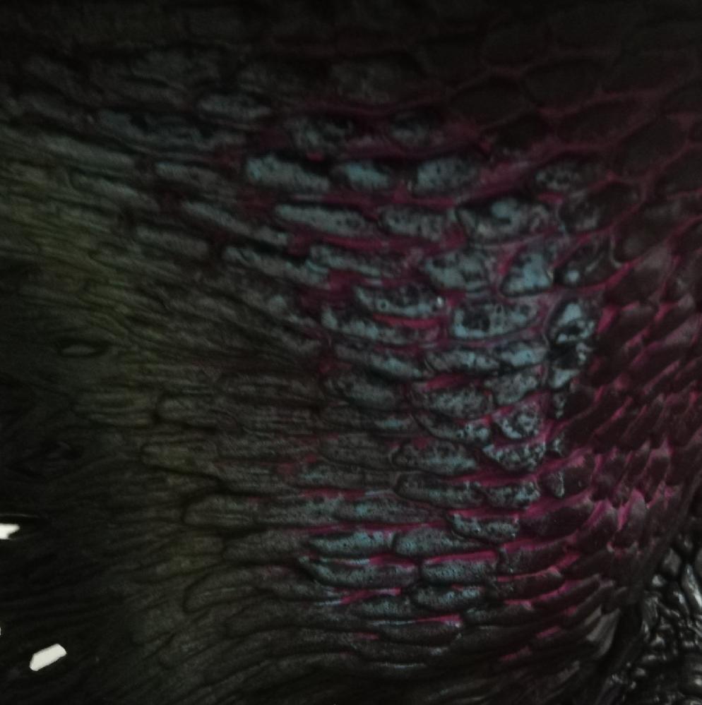 クリエイターズモデルのゴアマガラって翼膜の塗装こんなに雑なのでしょうか?本物のゴア・マガラ持っている方、どうか教えて下さい。モンハン