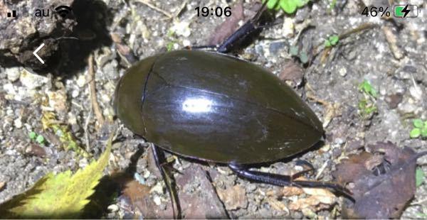 この昆虫が何か解る方、いらっしゃいますか? 教えて下さい^_^