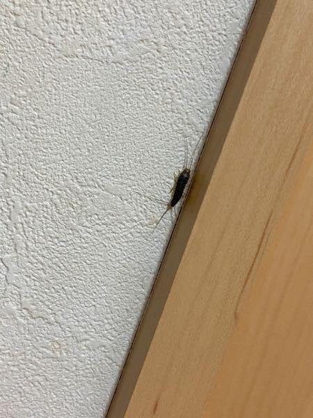 【至急・虫画像注意】これ何の虫ですか?今両親が仕事で家に自分1人しかいないのに突然現れて怖いです