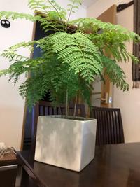 この植物の名前わかる方いましたら教えて下さい。 園芸店で見かけて、佇まいが気に入ったので名前もよくわからないまま 購入してしまいました。 宜しくお願いします。